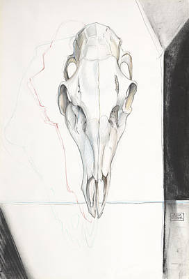 Ann Miller Wall Art - Drawing - Deer Skull by Ann Miller
