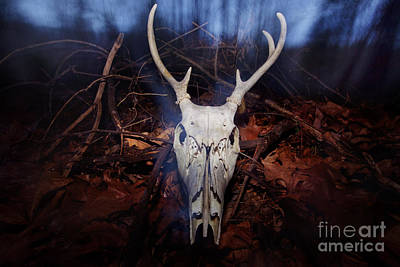 Deer Skull Art Print by Jonathan Welch