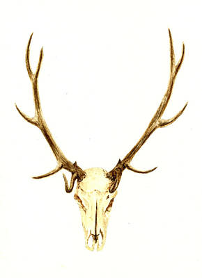 Painting - Deer Skull by Michael Vigliotti