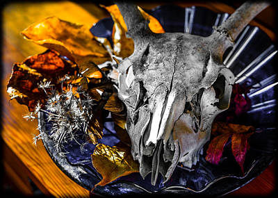 Photograph - Deer Skull With Autumn Leaves by Ronda Broatch