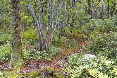 Deer Trail Early Autumn Pocono Mountains Pennsylvania Art Print