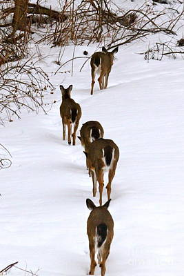 Deer Trail Art Print