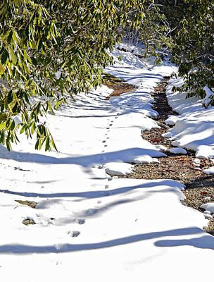 Deer Trail Print by Susan Leggett