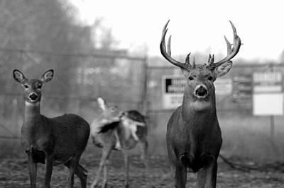 Deer Trio Art Print