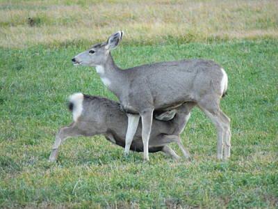 Deer Who Has Not Grown Up Yet Art Print by Jeff Swan