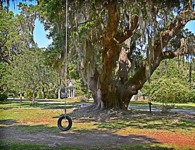 Photograph - Deerhead Oak by Linda Brown