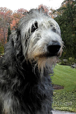 Deerhound Original