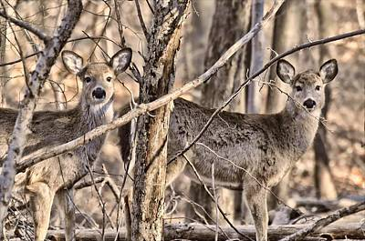 Photograph - Deerlings by Diana Angstadt