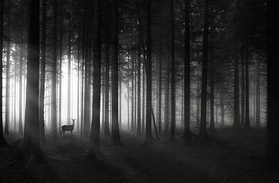 Deer Photograph - Deer`s Morning by Christoph Hessel