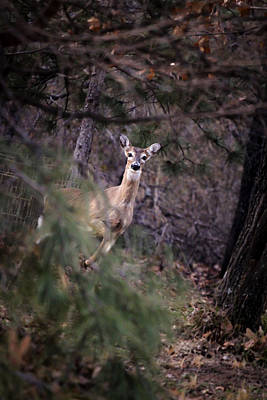 Photograph - Deer's Stomping Grounds. by Joshua Martin