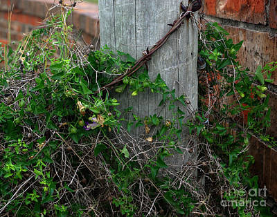 Photograph - De'fence Overdone  by Peter Piatt