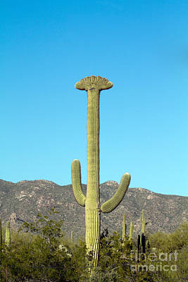 Photograph - Giant Saguaro Cristate by Martha Marks