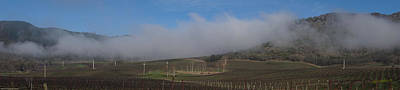 Photograph - Del Rio Vineyards Panoramic by Mick Anderson