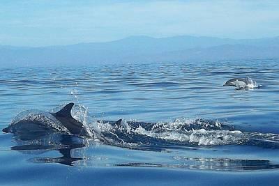 Photograph - Delfines by Tara Lowry