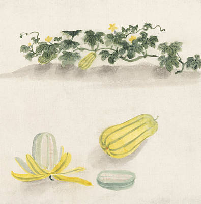 Agriculture Digital Art - Delicata Squash by Aged Pixel