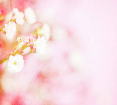 Photograph - Delicate Babys Breath Flowers by Catlane