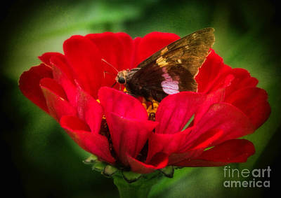 Photograph - Delicate Beauty by Elizabeth Winter