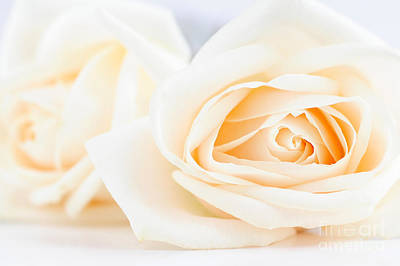 Roses Royalty-Free and Rights-Managed Images - Delicate beige roses by Elena Elisseeva