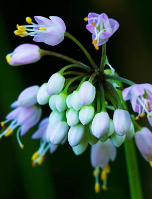 Photograph - Delicate Blooms by Haren Images- Kriss Haren