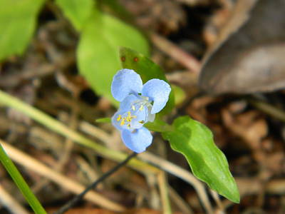 Photograph - Delicate Blue by George Pedro