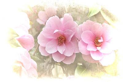 Delicate Camellias Art Print by Michelle Orai