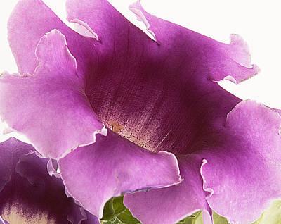 Photograph - Delicate Color by Robert Culver