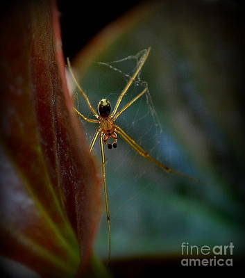 Art Print featuring the photograph Delicate  Constructor by Marija Djedovic