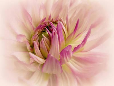 Soft Digital Art - Delicate Dahlia by Jessica Jenney