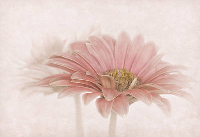 Photograph - Delicate Daisy by David and Carol Kelly