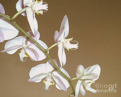 Photograph - Delicate Display by Geri Glavis
