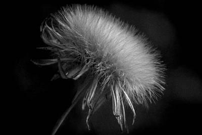 Photograph - Delicate by Edgar Laureano