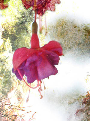 Photograph - Delicate Fall - Red Flowers - Textured by Marie Jamieson