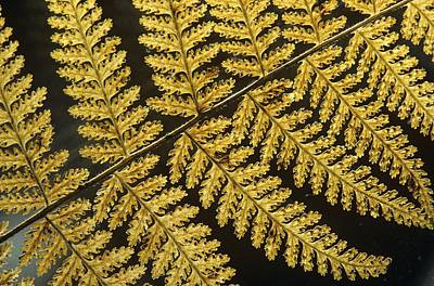 Photograph - Delicate Fern by Julie Grandfield