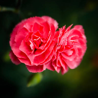 Photograph - Delicate Flower by Chris McKenna