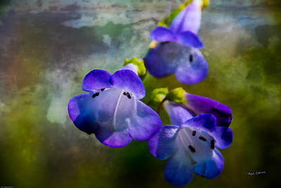 Photograph - Delicate Garden Beauty by Mick Anderson