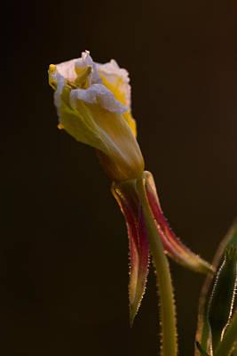 Photograph - Delicate by Haren Images- Kriss Haren