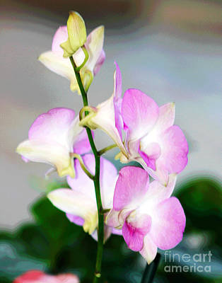 Photograph - Delicate Hawaiian Orchids by Larry Oskin