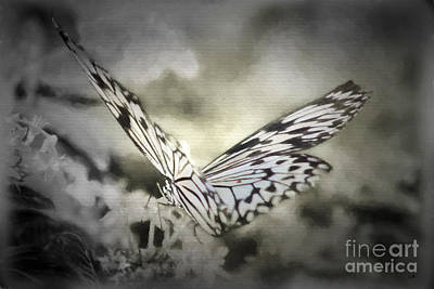 Photograph - Delicate Paperwhite Butterfly Black And White by Sandra Clark