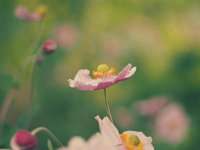 Photograph - Delicate by Patrick Horgan
