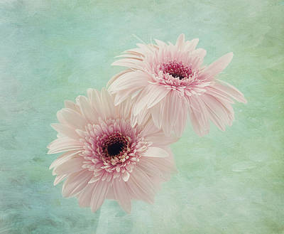 Flowers Gerbera Photograph - Delicate Pinks by Kim Hojnacki