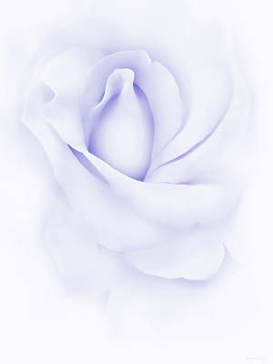 Photograph - Delicate Purple Rose Flower by Jennie Marie Schell