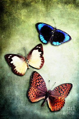 Fluttering Photograph - Delicate Specimens by Stephanie Frey