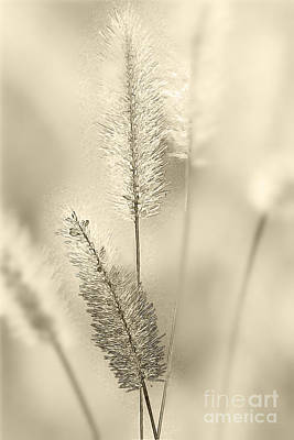 Delicate Sweetgrass Art Print by Heiko Koehrer-Wagner