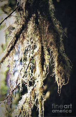 Photograph - Delicate Tree Moss by Chalet Roome-Rigdon