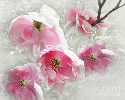 Photograph - Delicate Tree Peonies Branching Out by Barbara McMahon