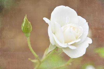 Photograph - Delicate White by Jan Amiss Photography