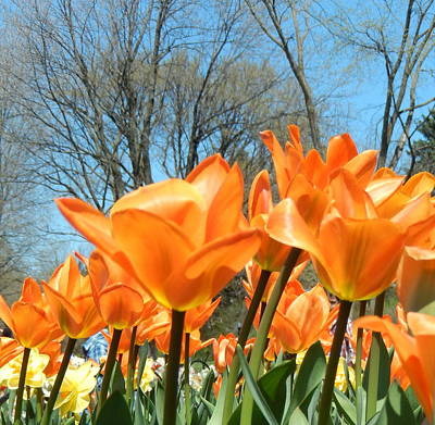 Photograph - Delicious Orange by Betty-Anne McDonald