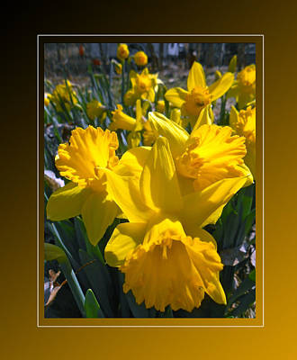 Delightful Daffodils Print by Patricia Keller