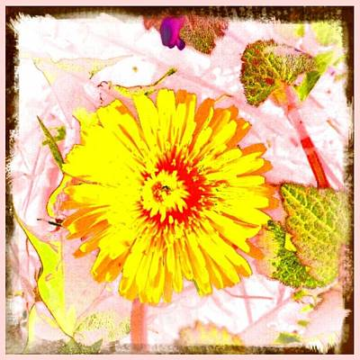 Photograph - Delightful Dandelion by Marianne Dow