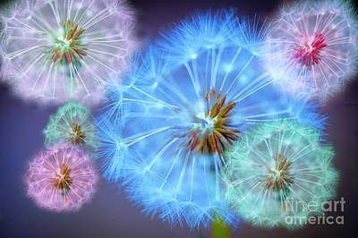 Pink Flower Digital Art - Delightful Dandelions by Donald Davis